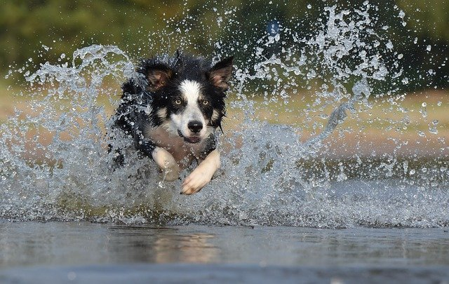 Australia's Most Popular Dog Breeds